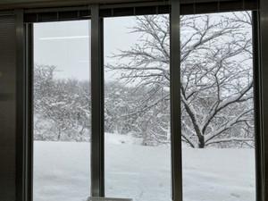 今年の大雪