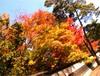Pic_0651